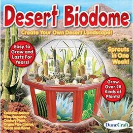 Terrarium z pustynnymi roślinami