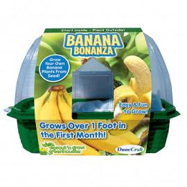 Zestaw do hodowli bananów w domu