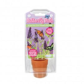 Butterfly Bush Capsule Terrarium