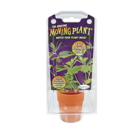 The Amazing Moving Plant Capsule Terrarium