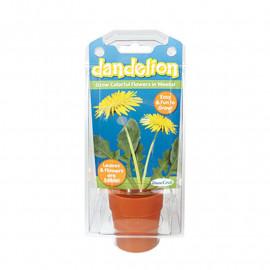 Dandelion Capsule Terrarium