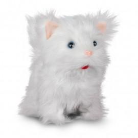 Słodki Puszysty Kociak