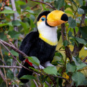 ANIMIGOS WORLD OF NATURE TOUCAN