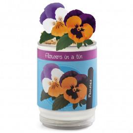 Kwiatek w puszce - Flowers In A Tin