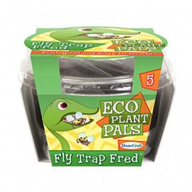 Pułapka na muchy – hodowla własnej rośliny